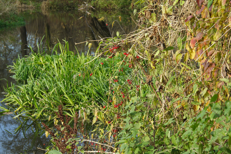 Download Thicket stock image. Image of nature, bushes, green, lake - 8023391