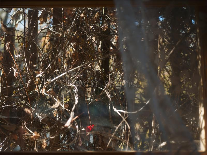 Thicket behind a window. View through the window and thicket behind it, shallow depth of field cropped shot stock image