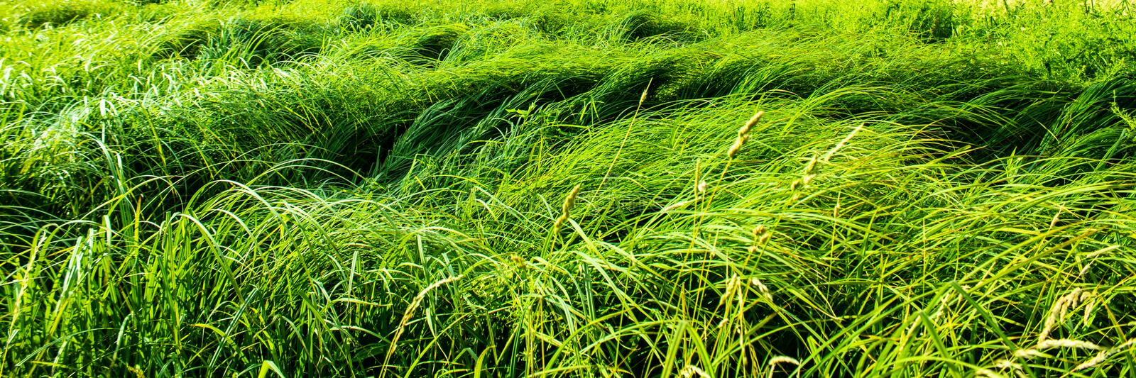 Thickets of uneven grass royalty free stock photography