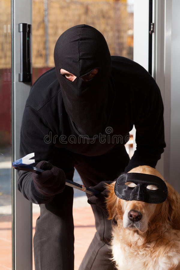 Thief stealing his accomplice. Thief stealing in a house with his accomplice stock images
