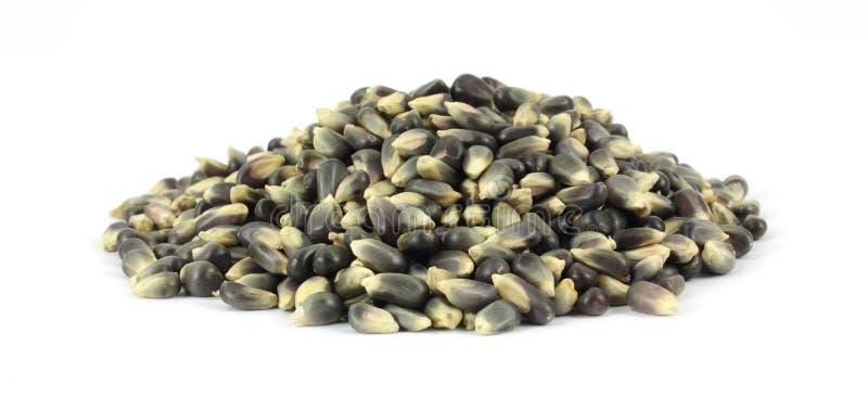 Download Thin Hulled Black Popcorn Royalty Free Stock Image - Image: 14714406
