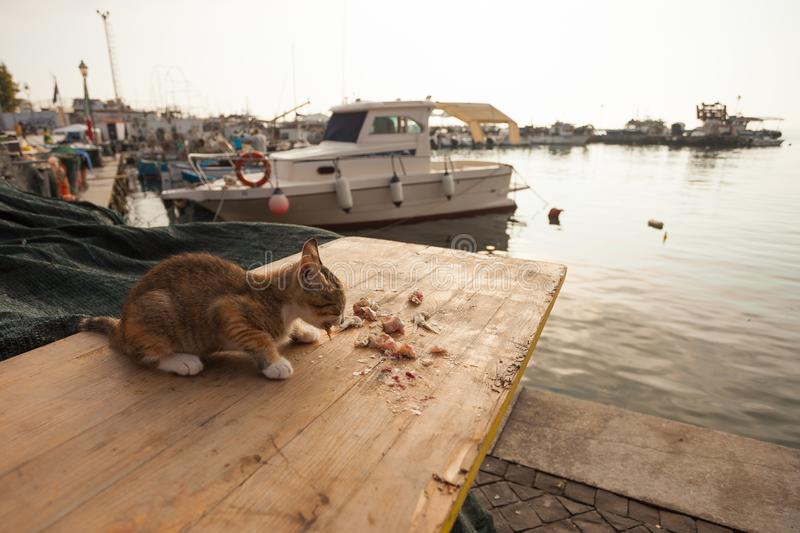 Thin little cat is eating some fish on a wooden table at the harbour.  stock photo