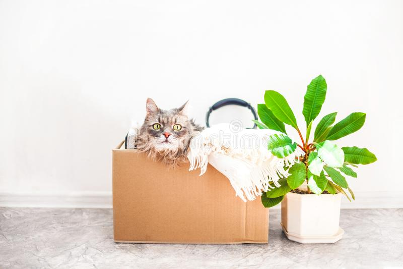 Boxes for moving with things, a cat in a box, a flower in a pot. Garage sale concept Copy space. Things to move, a cat in a box, a flower in a pot. Garage sale royalty free stock photo