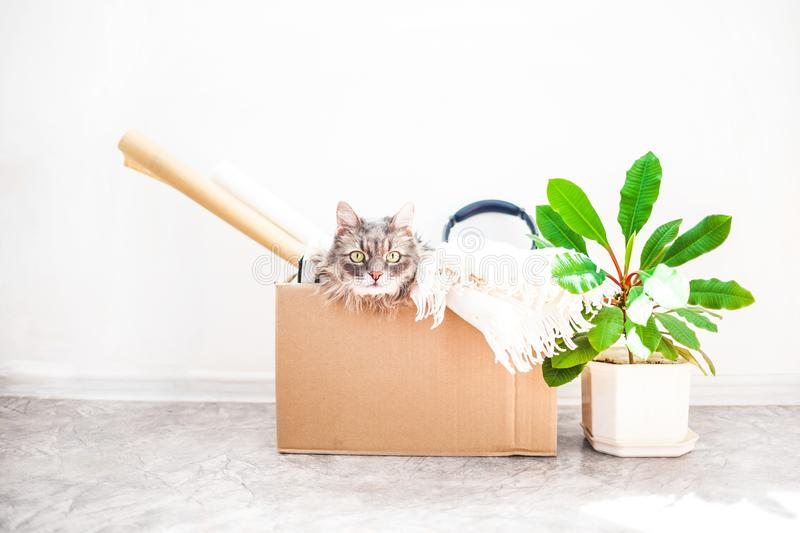 Boxes for moving with things, a cat in a box, a flower in a pot. on a white background Garage sale concept Copy space. Things to move, a cat in a box, a flower stock photo