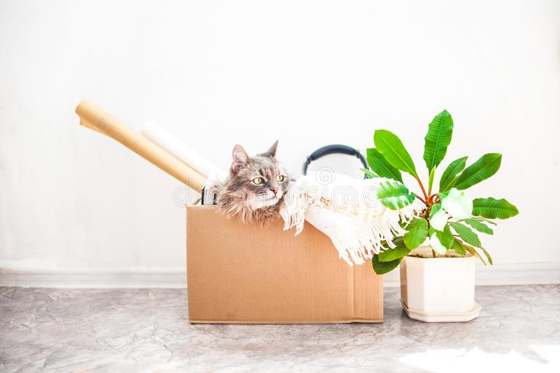 Things to move, a cat in a box, a flower in a pot on a white background Garage sale and moving concept Copy space. Things to move, a cat in a box, a flower in a royalty free stock photography