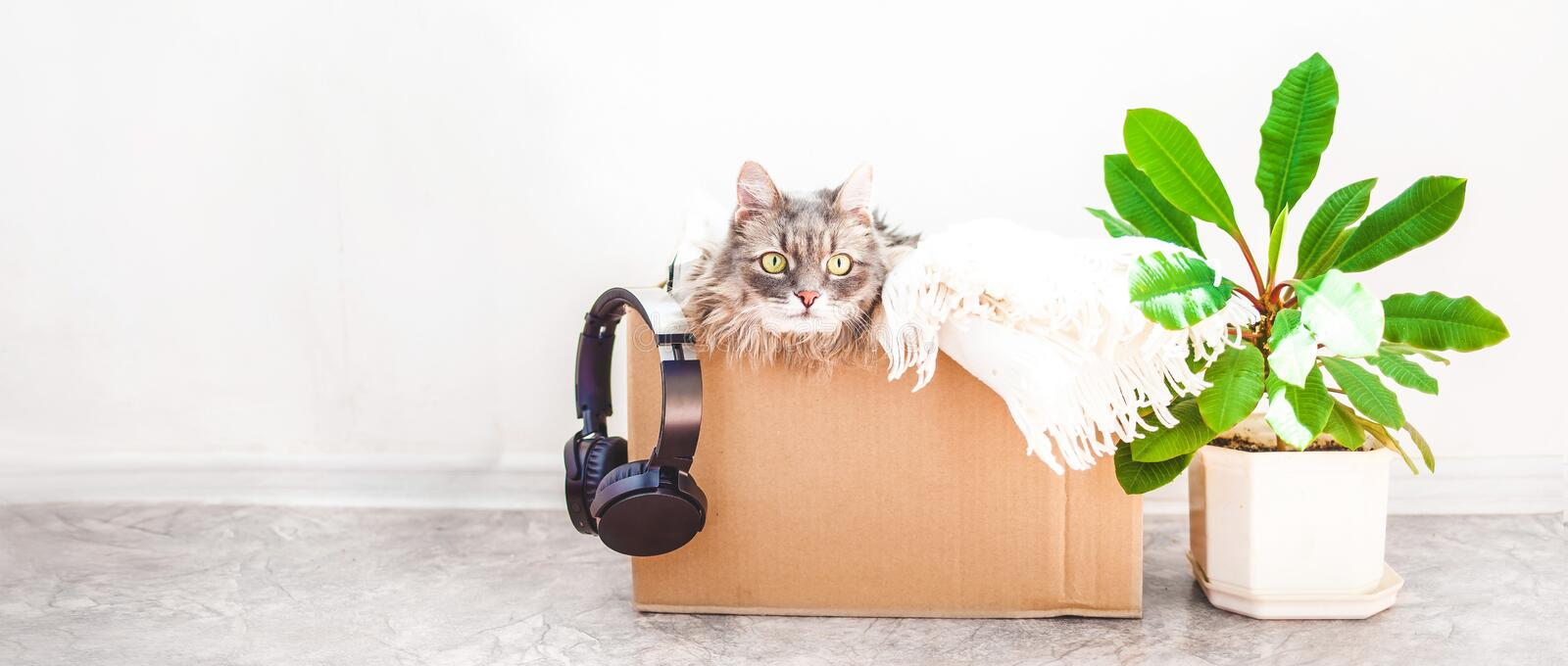 Things to move, a cat in a box, a flower in a pot jn a white background Garage sale and moving concept Copy space Banner.  stock photos