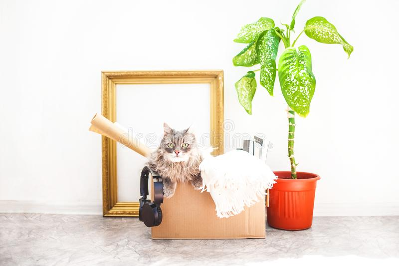 Things to move, a cat in a box, a flower in a pot , old frame on a white background Garage sale and moving concept Cop,y space.  stock photography