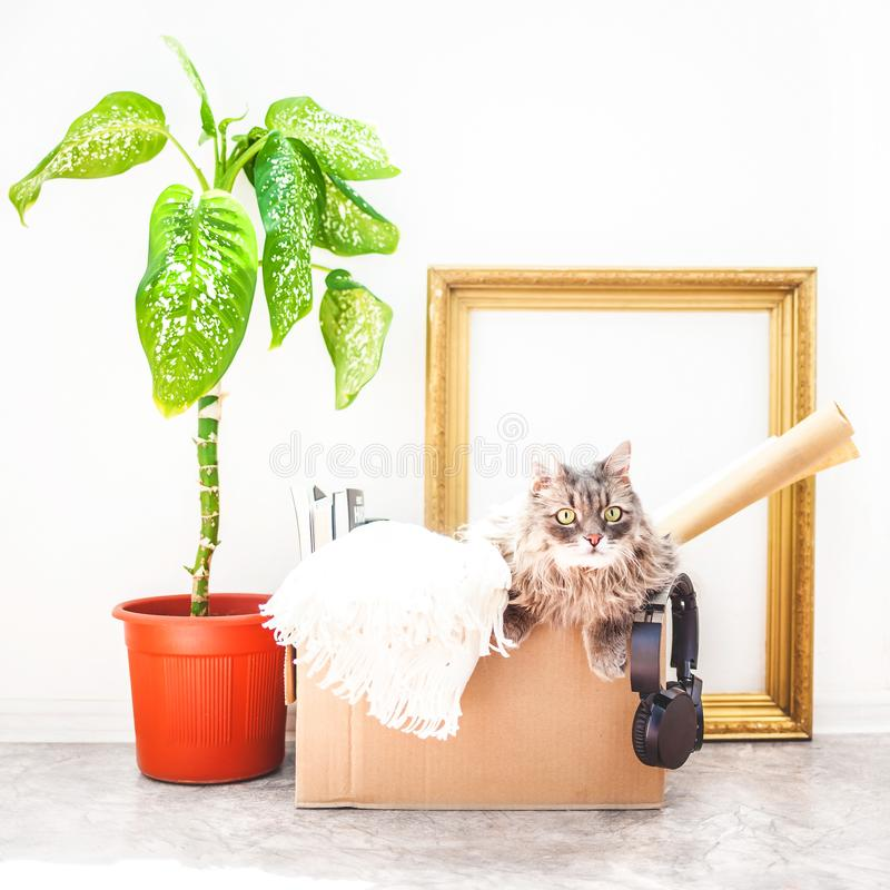 Things to move, a cat in a box, a flower in a pot , old frame on a white background Garage sale and moving concept Copy space.  royalty free stock images