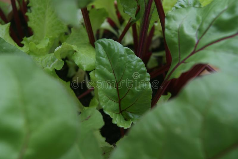 Going green. Think green eat healthy food stock photography