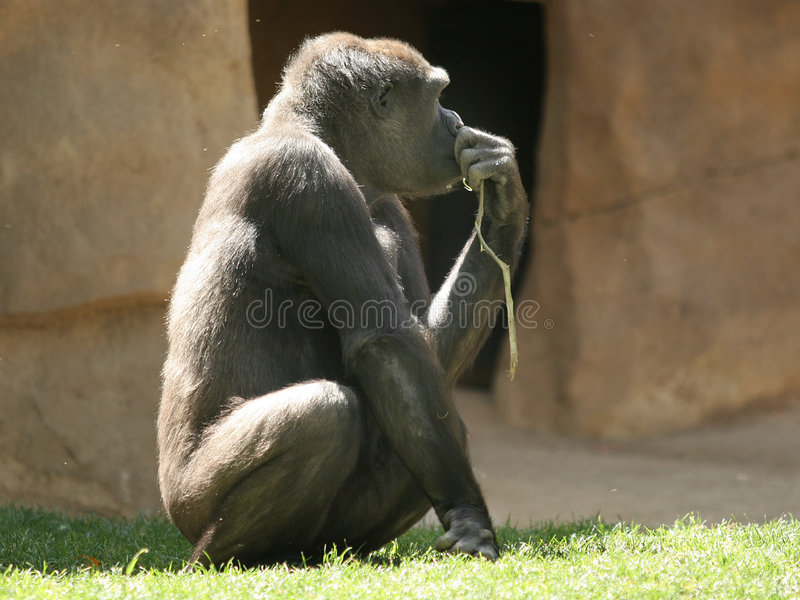 The thinker royalty free stock photo