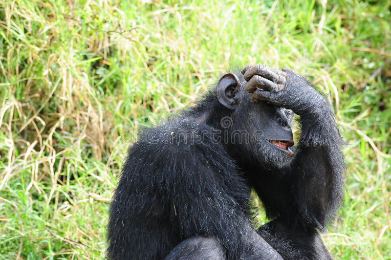 Download The thinker stock image. Image of africa, bush, wilderness - 34310055