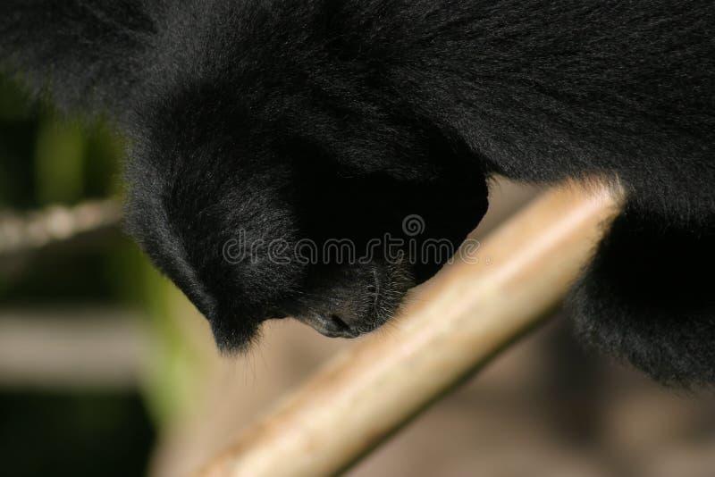 Download Thinking stock image. Image of furry, like, thinking, monkeys - 54323
