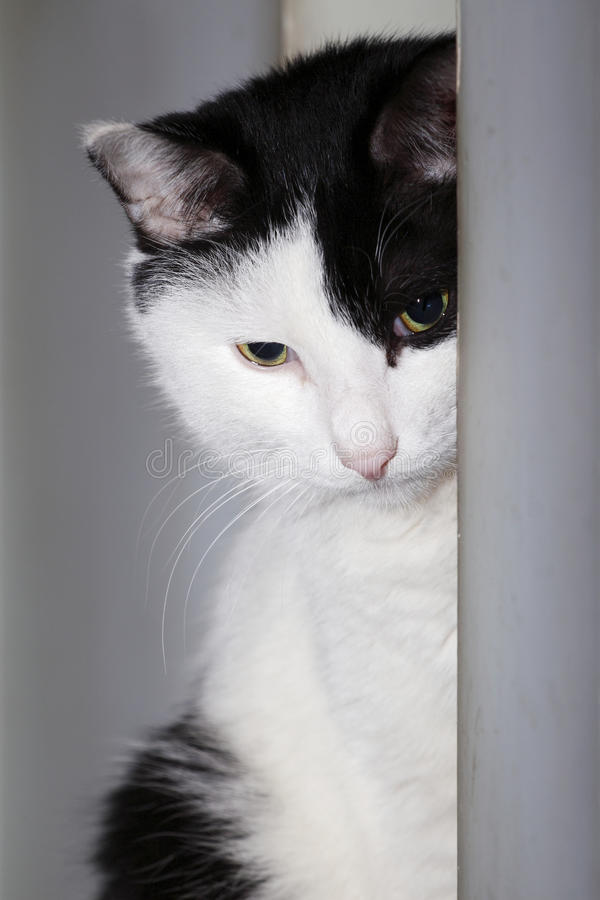 Thinking cat stock images