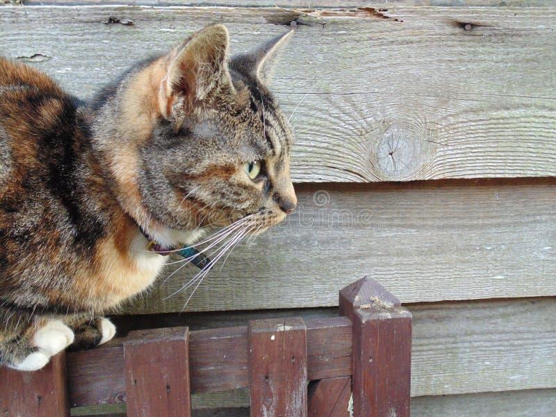 Thinking cat stock images