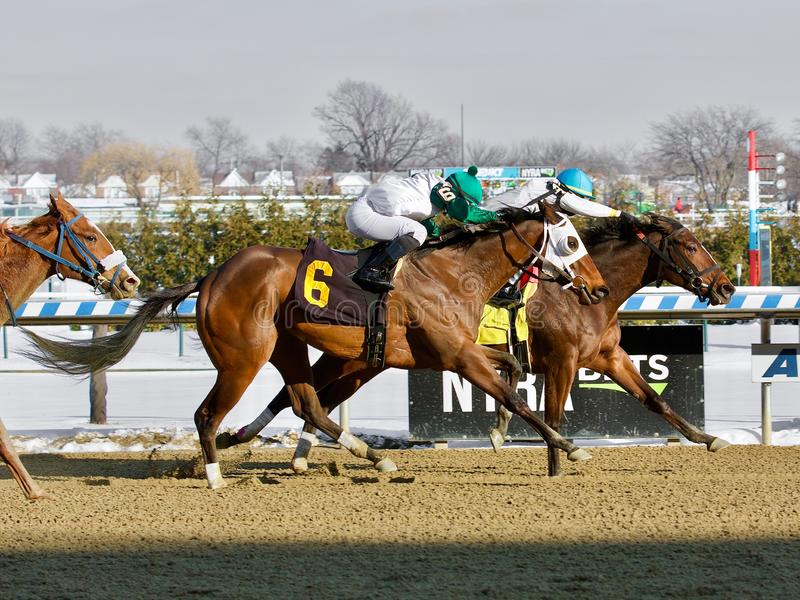 Thinking of Glenn beats Charming Cara. On a cold snowy Winter day at the Big A. These two talented fillies finished heads apart in a dueling thrilling finish royalty free stock photos