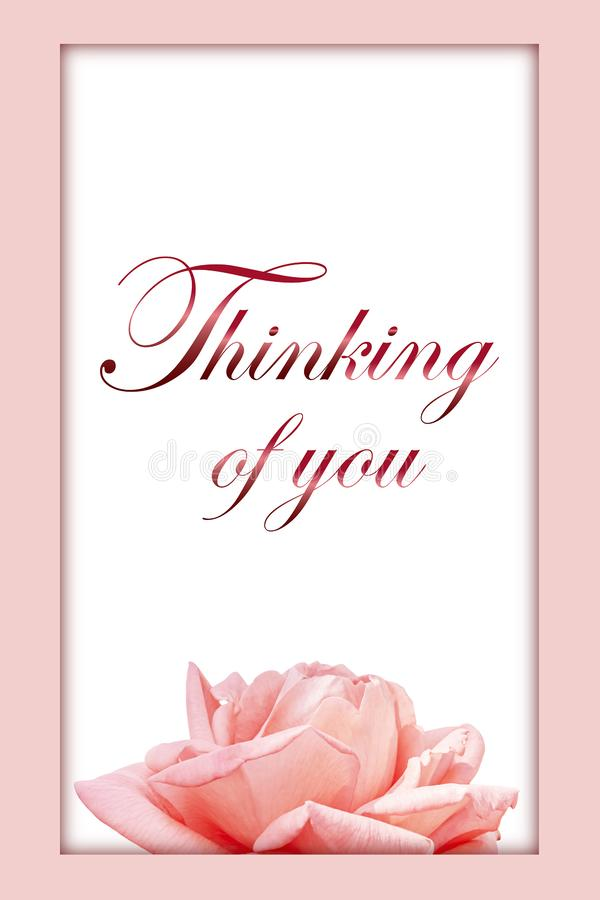 Thinking of you - card. Pink rose. Thinking of you - card. rose royalty free stock photos