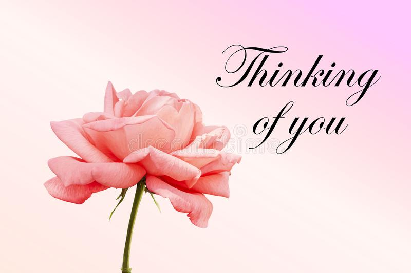 Thinking of you - card. Pink rose. Thinking of you - card. rose royalty free stock image
