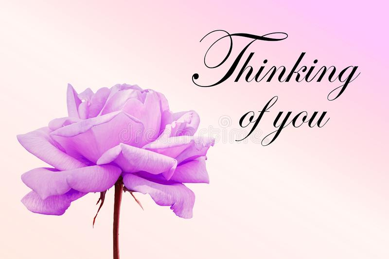 Thinking of you - card. Pink rose. Thinking of you - card. rose royalty free stock photo