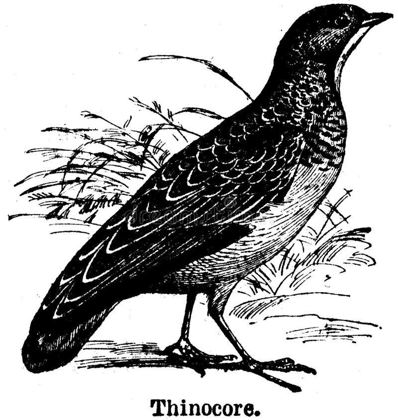 Thinocore Free Public Domain Cc0 Image