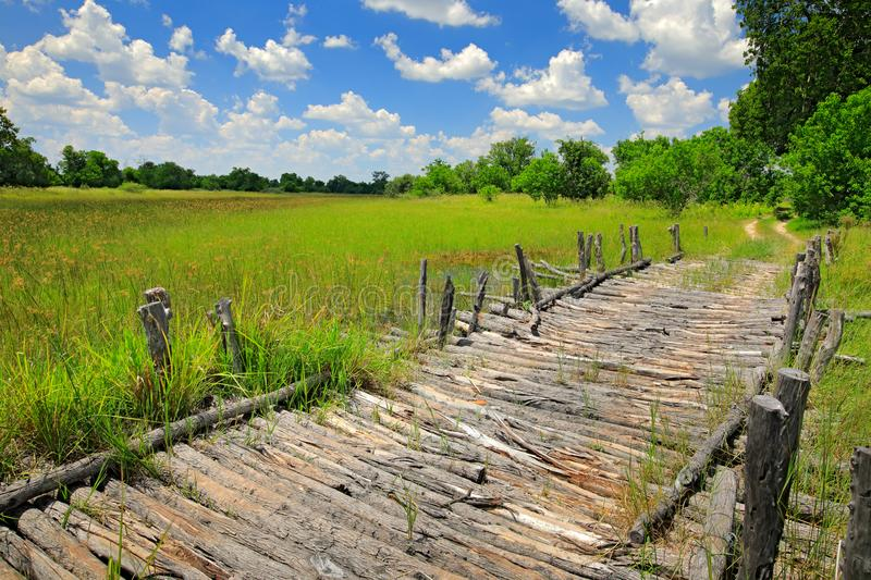 Third Bridge, Moremi Game Reserve in Okavango Delta, Botswana. Wet season with green vegetation and blue sky with white clouds, Af. Rican landscape. Driving in stock photo