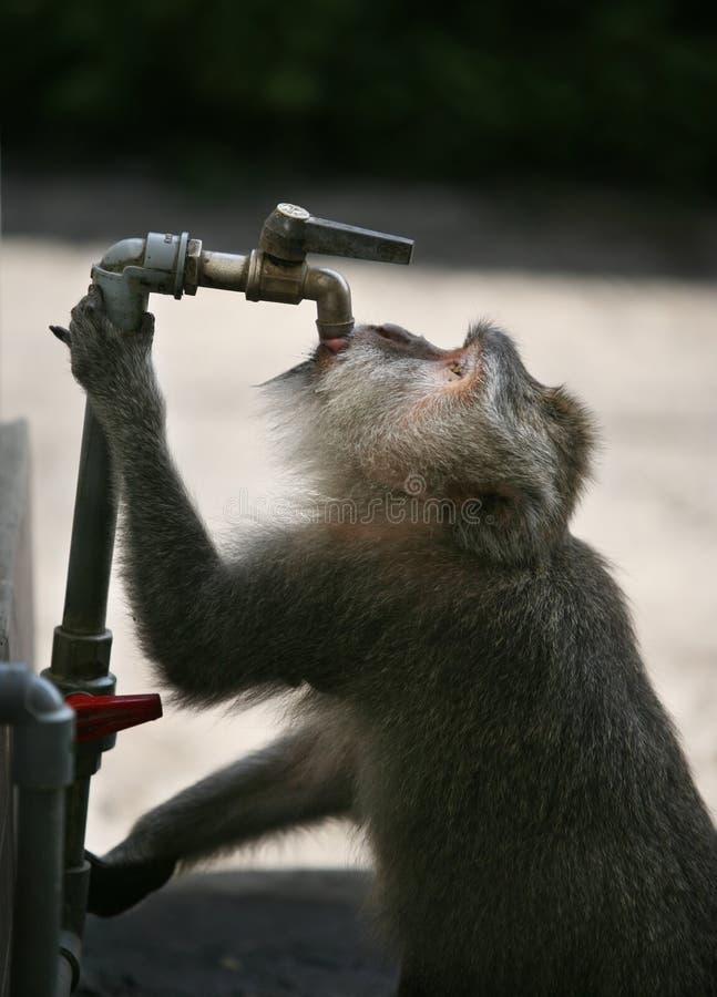 Thirst royalty free stock photo