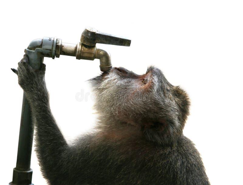 Thirst Stock Photos