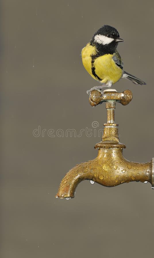 Thirsty. royalty free stock photos