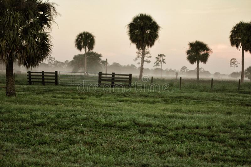 Thisisnativeflo mgła na rancho zdjęcia royalty free