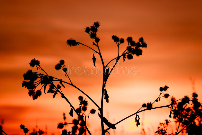Thistle, dry grass silhouette. Nature spring background royalty free stock photography