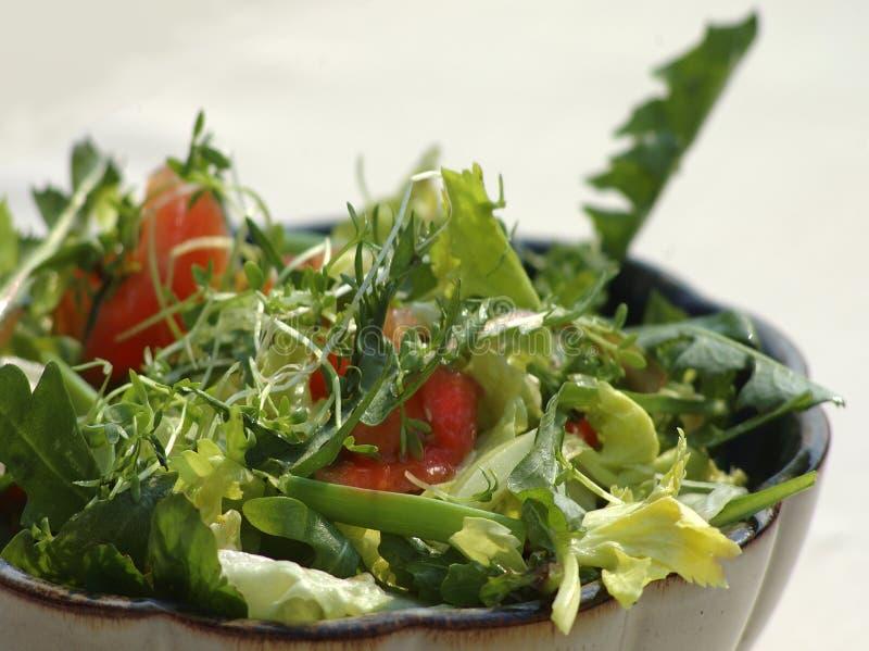 thistle för salladsuggafjäder royaltyfri foto