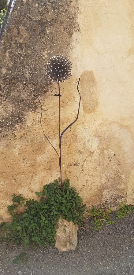 Thistle flower standing by wall. Muse, nature, wall, aesthetic stock images