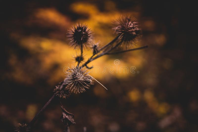Thistle growing in the forest, autumn scene. stock photos