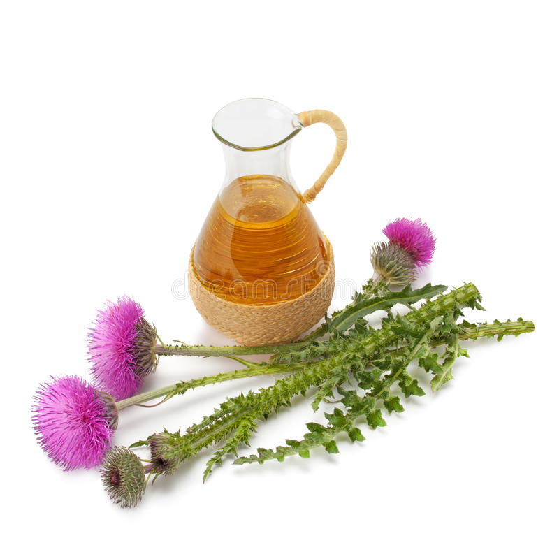 Thistle oil and milk thistle flower. Isolated on white background royalty free stock images