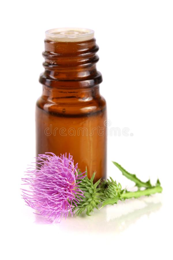 Thistle oil and milk thistle flower isolated on white background.  stock image