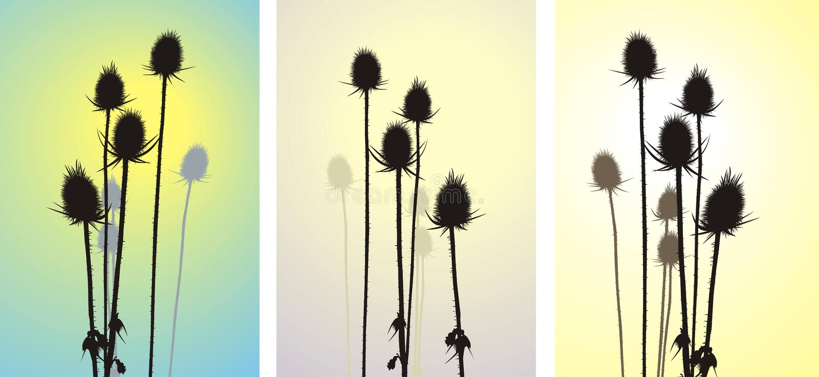 Thistle, Vector Illustration Stock Images