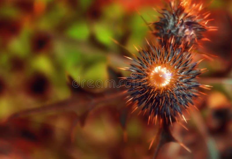 thistles royaltyfria foton