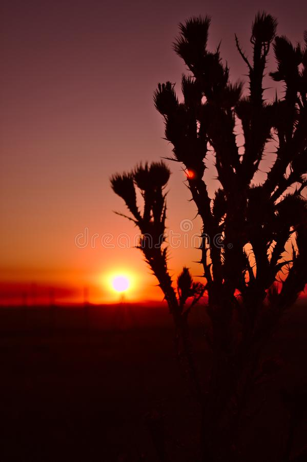Thistles sunset stock photography