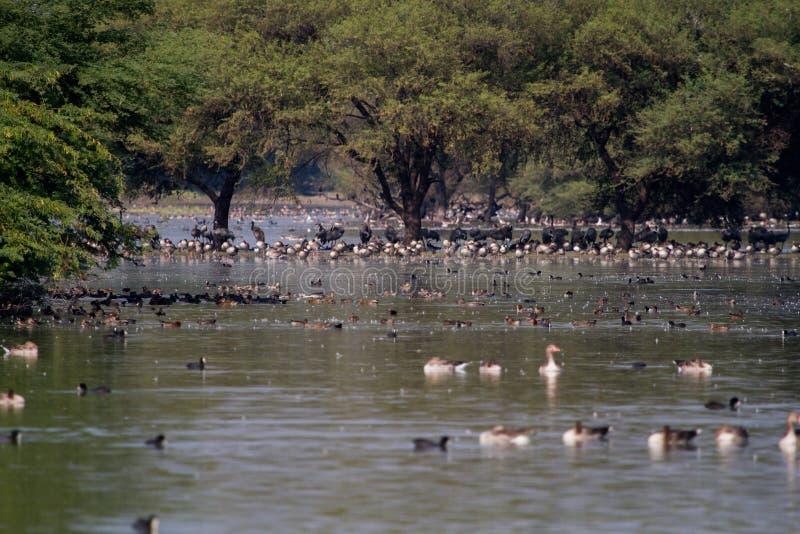 Thol jezioro z zima ptakami migrującymi zdjęcia stock