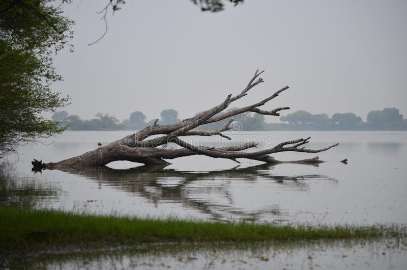 Thol-Vogelschutzgebiet stockbild