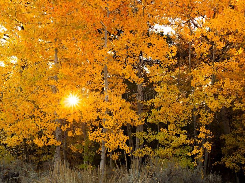 Thomas Creek Aspens and Sunrise, Nevada stock image