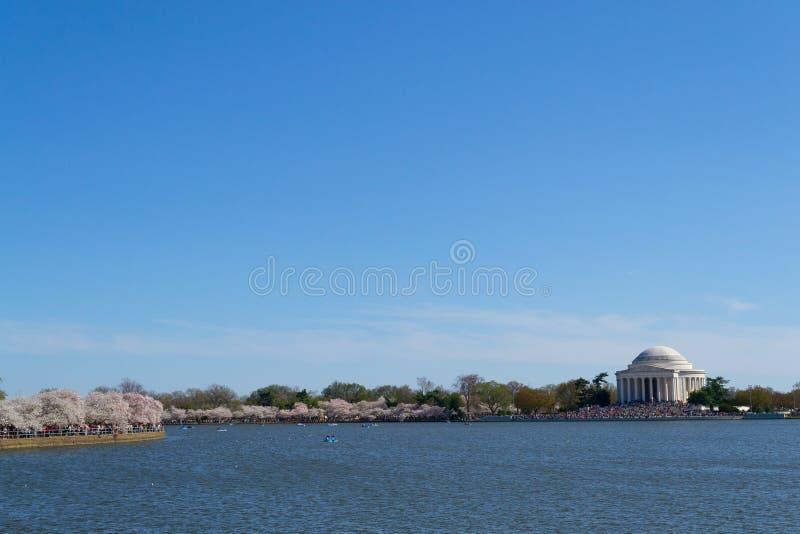 Thomas Jefferson Memorial under Cherry Blossom Festival arkivbilder