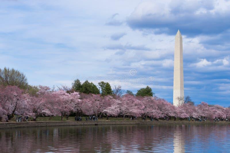 Thomas Jefferson pomnik podczas Czereśniowego okwitnięcia festiwalu przy pływowym basenem, washington dc obraz royalty free