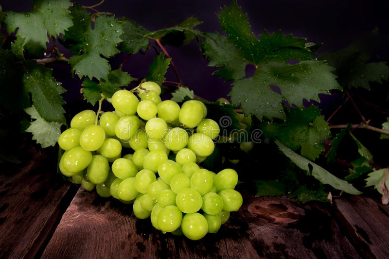 Download Thompson Seedless Grapes stock photo. Image of cluster - 32666744
