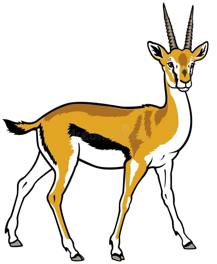 Download Thomson gazelle stock vector. Illustration of herbivore - 29047864