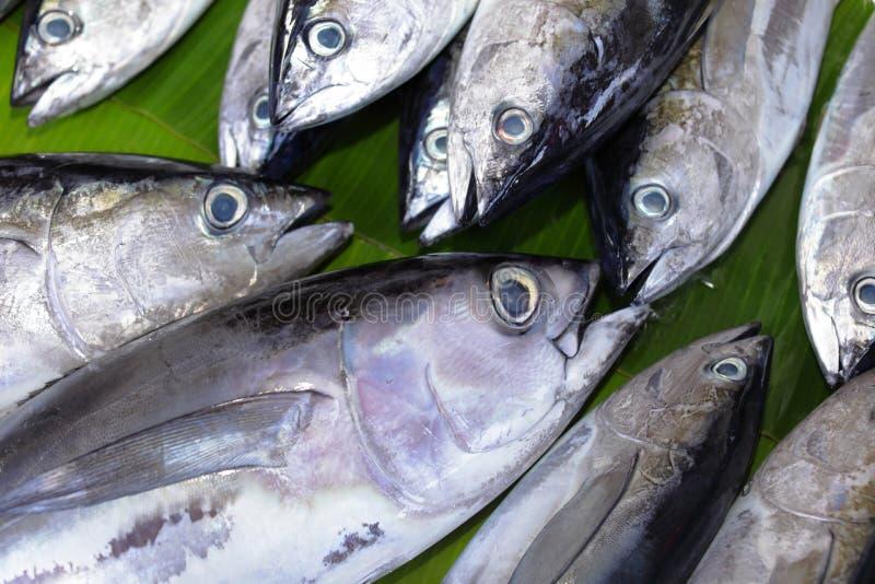 Thon de bonites et de truite saumonnée photo libre de droits