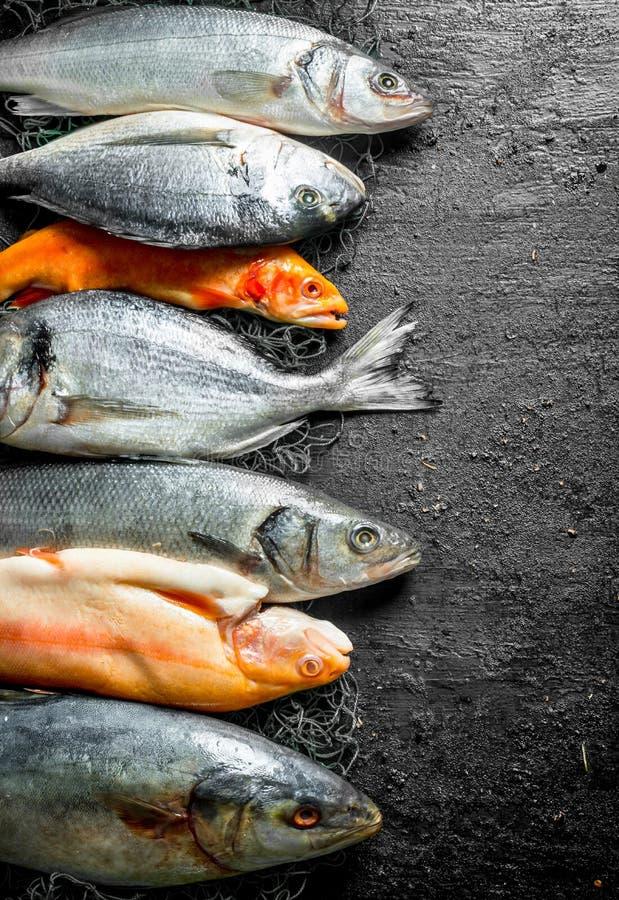 Thon de poisson frais, bar de mer et truite photos stock