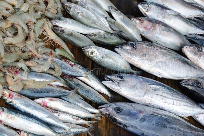 Thon, sardines et crevettes de poisson frais - se vendant à la poissonnerie images libres de droits