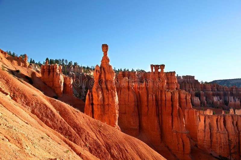 Thor`s Hammer in Bryce Canyon National Park. Thor`s Hammer and the amazing hoodoos along Navajo Trail in Bryce Canyon National Park stock photography