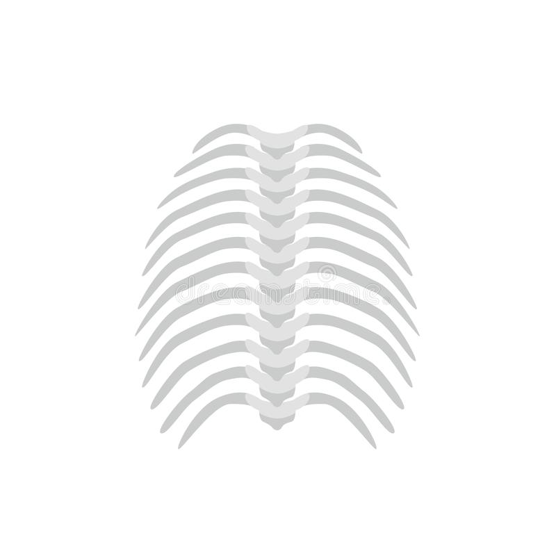 Thoracic backbone and straight spine concept vector illustration in flat design isolated on white background. Medical. Infographic element, spine and ribs icon royalty free illustration