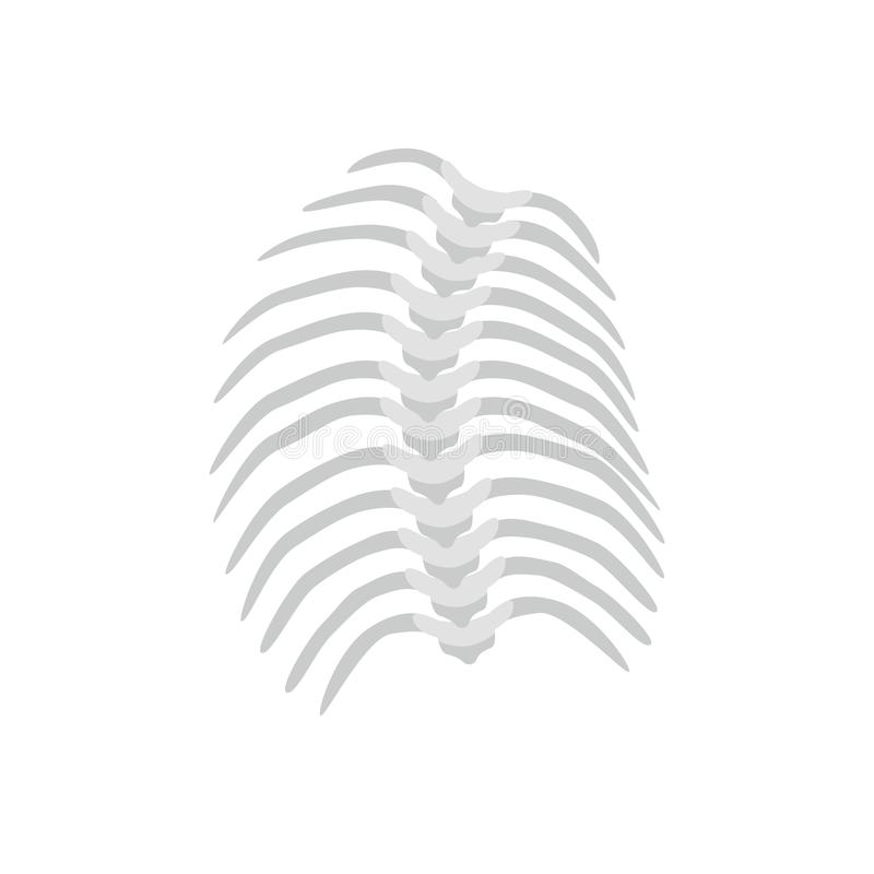 Thoracic Scoliosis on the thoracic spine and curved backbone concept vector illustration in flat design isolated on. White background. Scoliosis medical stock illustration